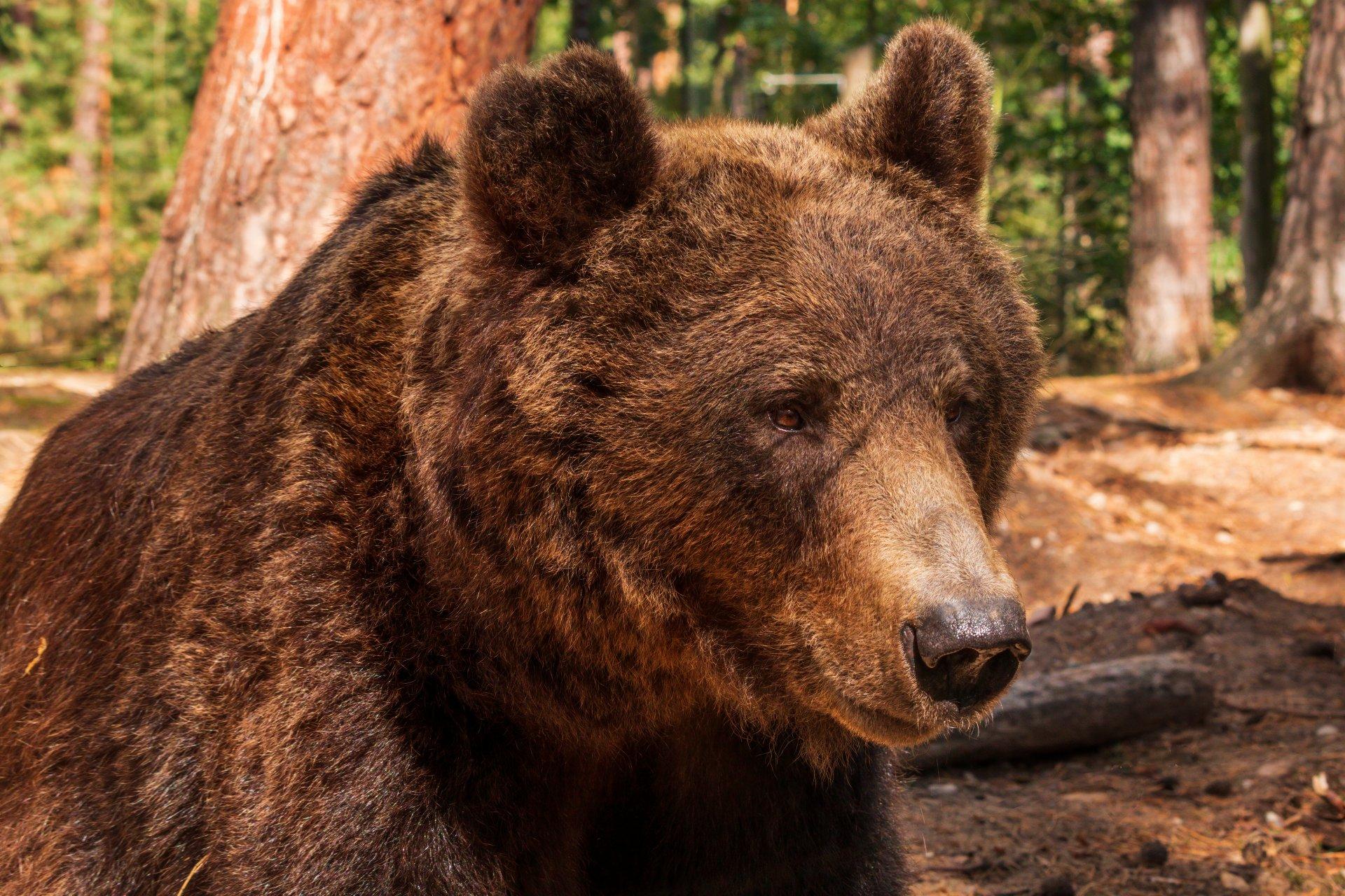 04.11.20 Großer Bär.jpg