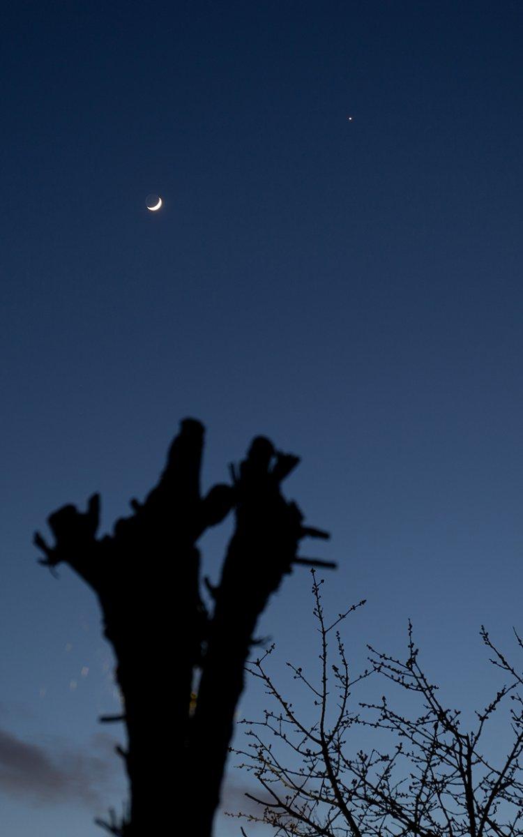 20200328-moon-venus-0022-768.jpg