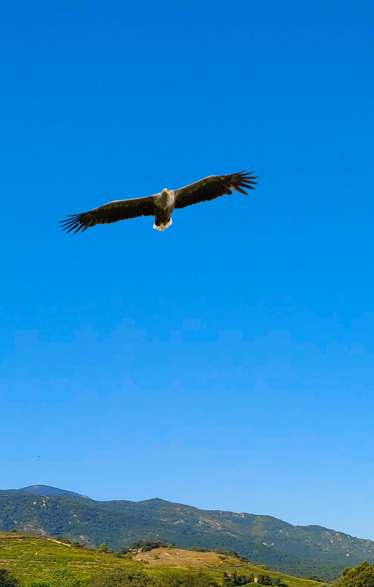 Adler fertig 02.jpg