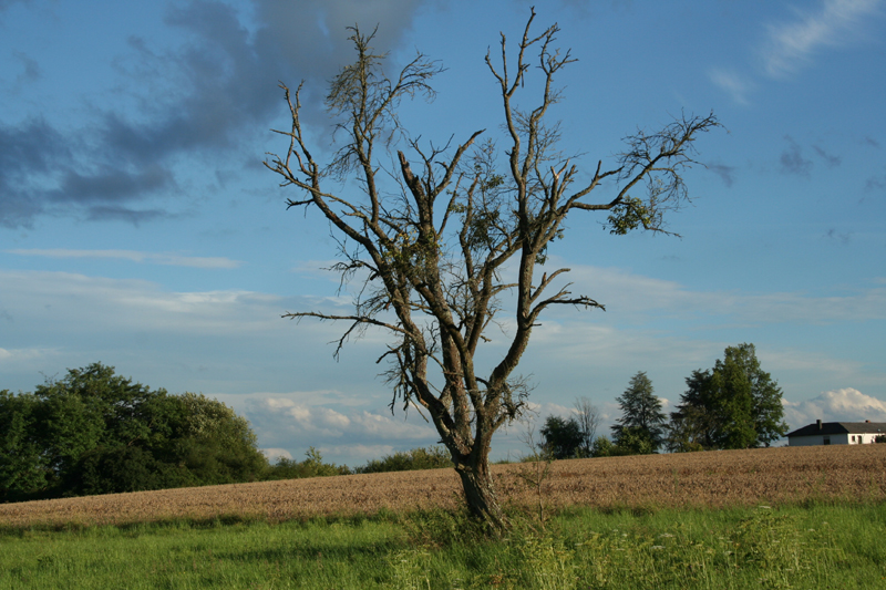 gruselbaum.jpg