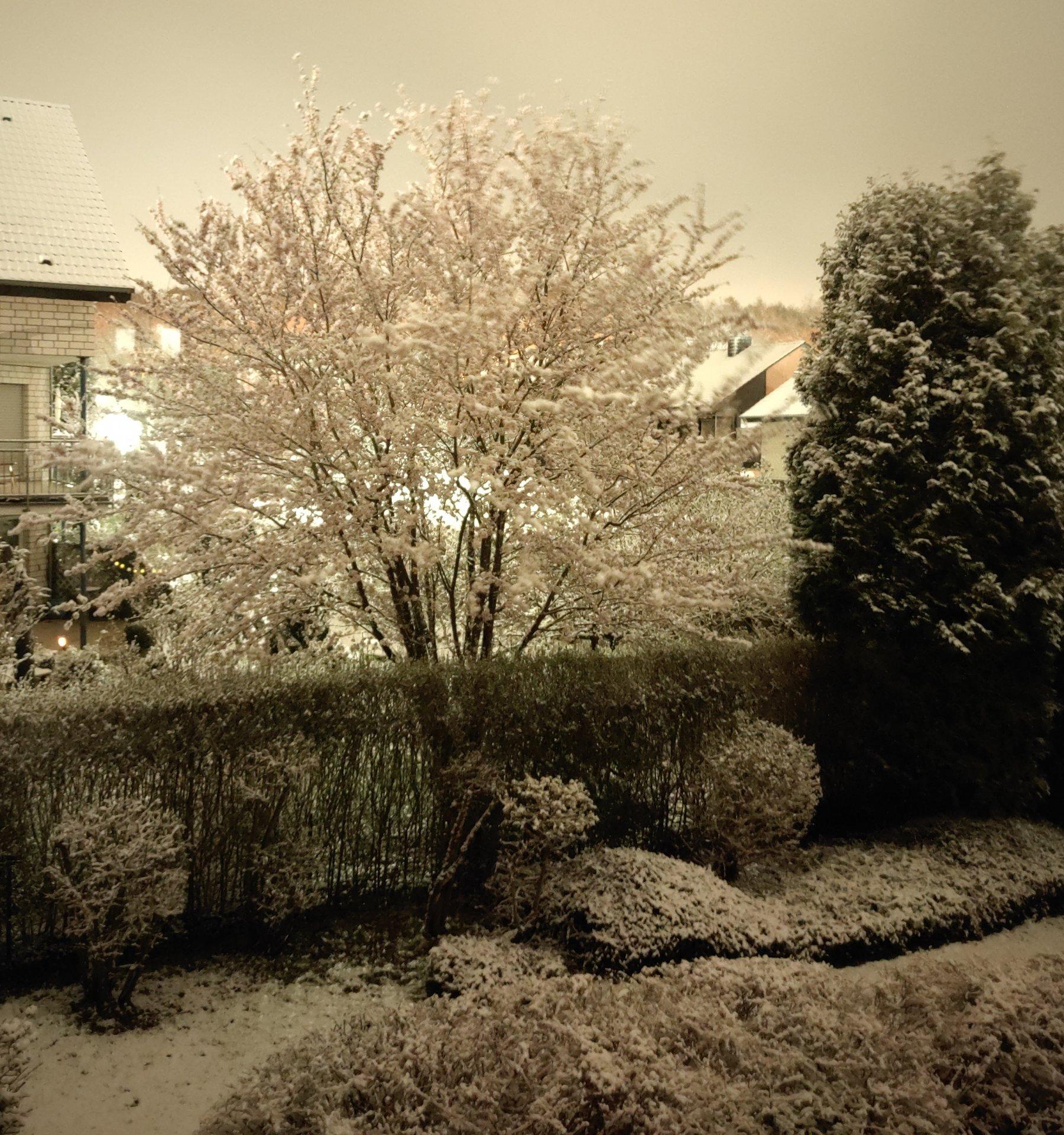 Schneebaum3.jpg