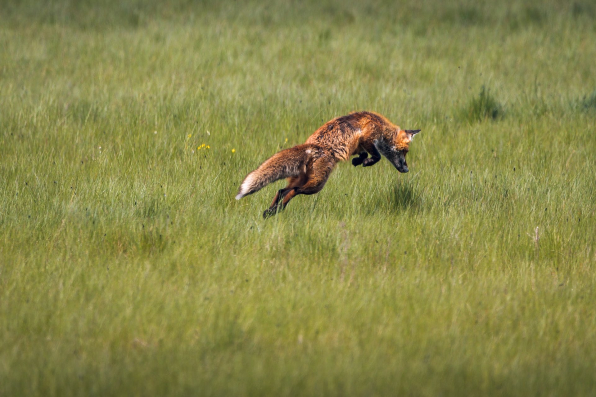 x 07.05.21 Fuchs I.jpg