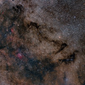 Vulpecula Widefiled