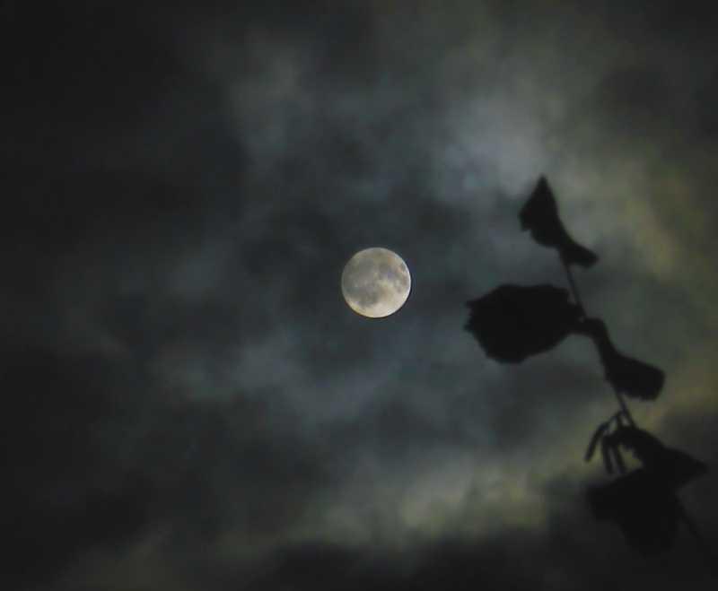 Mond031117Final.jpg